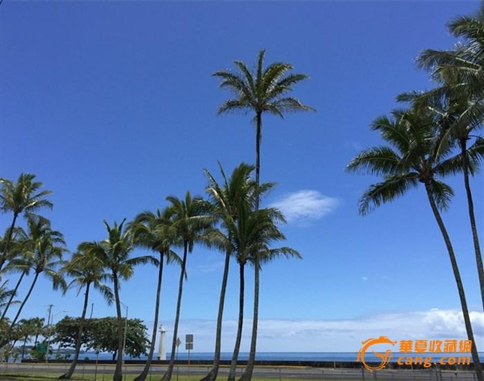 椰树海景.
